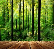 Forêt verte avec des rayons de soleil et le plancher en bois