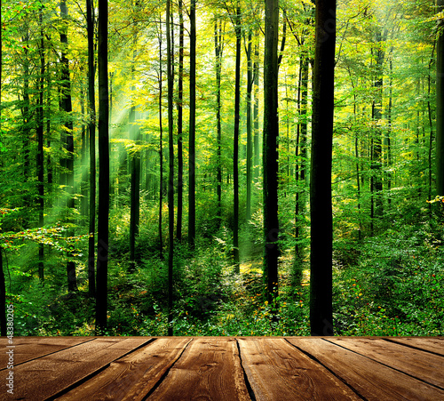 Fototapeta Fresh green forest with sunbeams and wooden floor