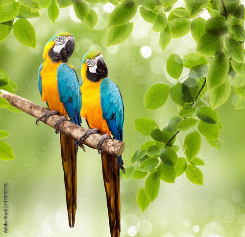Papiers peints Perroquets macaw parrot on a tree