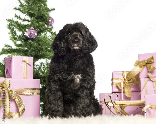 Tibetan terrier sitting in front of Christmas decorations