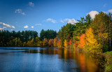 Fototapety Forest Lake in autumn