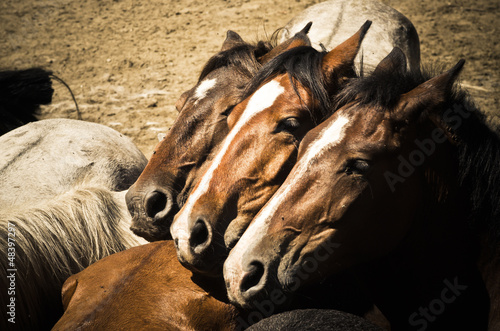 Fototapeten,tier,vieh,pferd,spanien