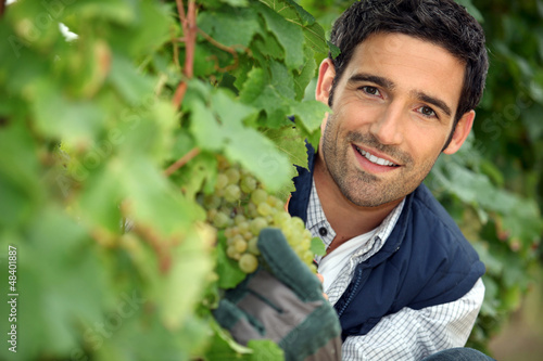 Man behind bunches of grapes in vineyard