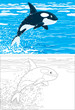 orca leaping out of the water in a polar sea