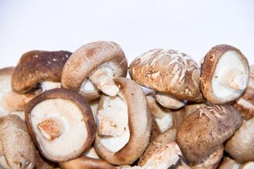 fresh mushroom champignon isolated on white background