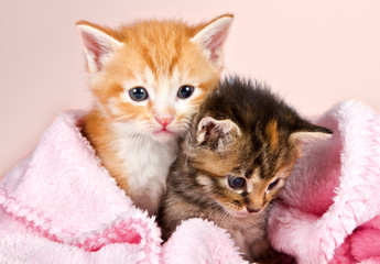 Baby kittens wrapped in a pink blanket