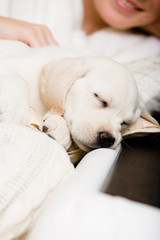 Close up of sleeping white puppy on the hands
