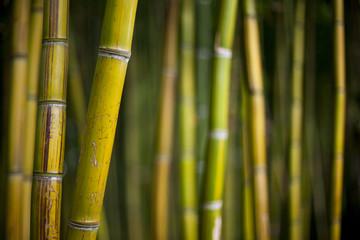 Bambou, jardin, parc, forêt, végétal, asie, vert, arbre