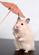 hamster and umbrella