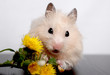 the hamster gnaws flowers
