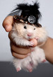 hamster in an elegant hat