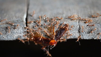 Ants are carrying food