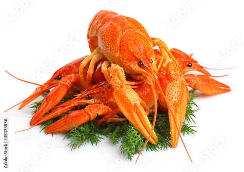 Group of red lobsters with garnish isolated on white