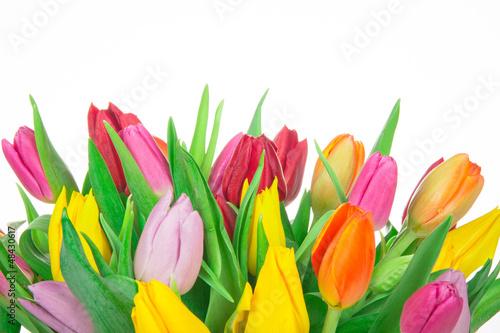 Tulips background