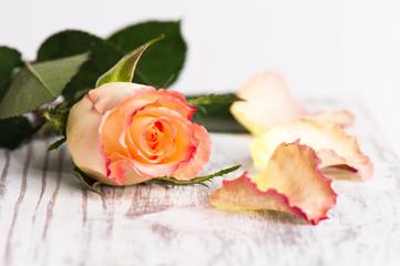 Rose mit Rosenblätter