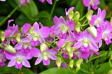 Colourful Orchids in Singapore Botanic Garden