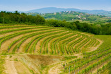 Collio vineyards - 48444441