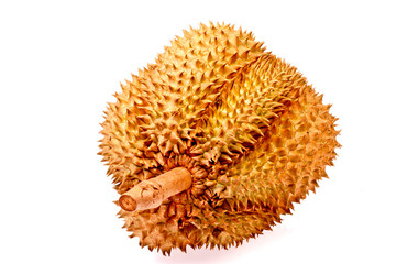 Durian tropical fruit of  thailand in isolated