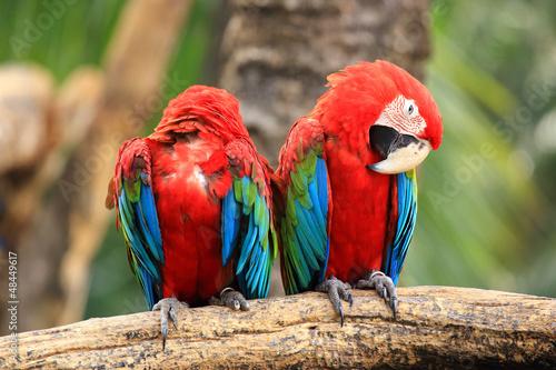 Macaw bird sleep on tree