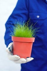 Hand holding potted green grass