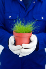 Hands holding potted green grass