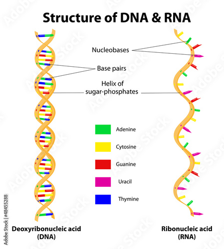 Structure DNA and RNA molecule. Vector