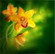 Fototapeten,rosa,orchidee,blume,isoliert