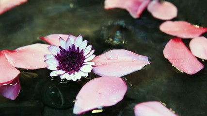 Fleur et gouttes