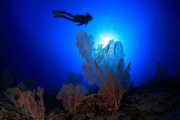 Korallenriff mit Taucher
