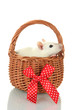 funny little rat in basket, isolated on white