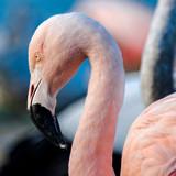 Fototapete Schön - Schönheit - Vögel