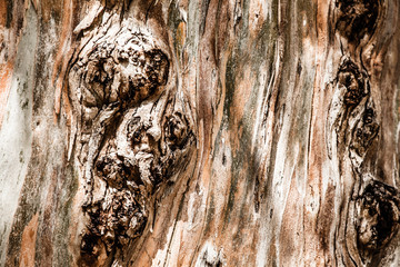 wood bark as perfect background