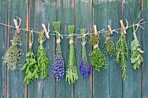 herbs - 48490250