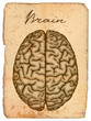 Old manuscript with illustration of human brain.