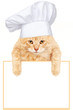 Cat chef with banner.
