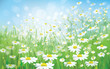Vector of spring background with white daisies.