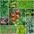 Gemüse aus dem Garten