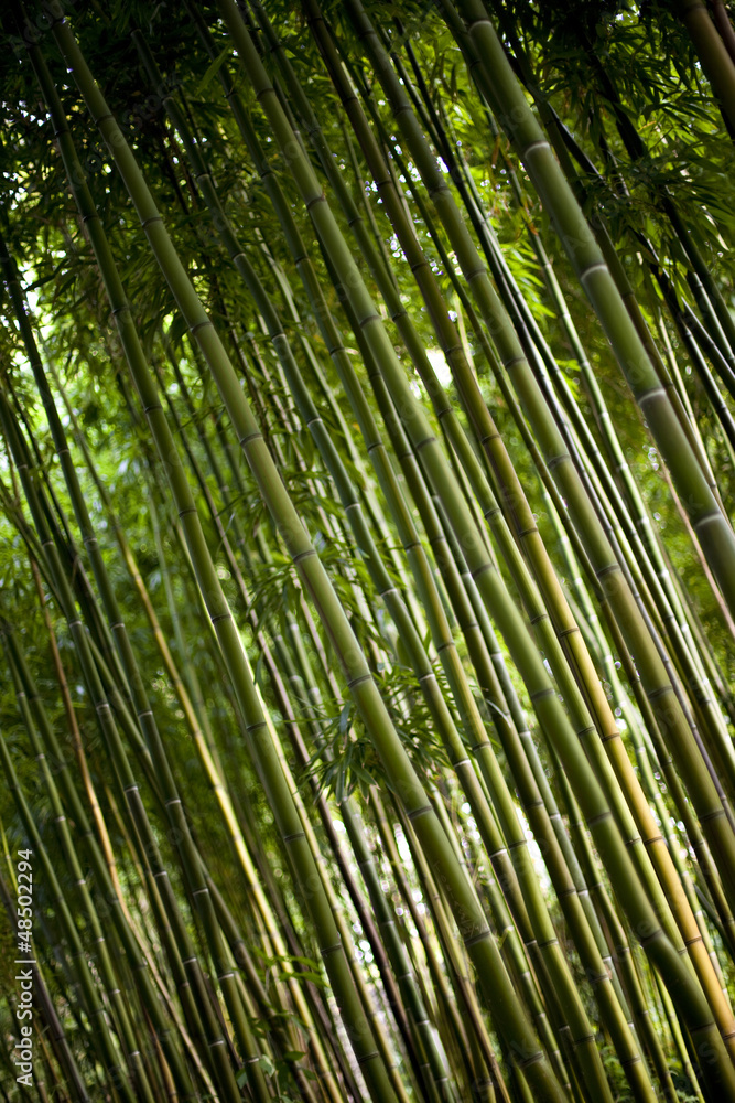Printed kitchen splashbacks bambou asie for t bois for Jardin foret