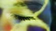 woman's eye in the light