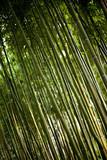 Bambou, Asie, forêt, bois, jardin, parc, vert, nature