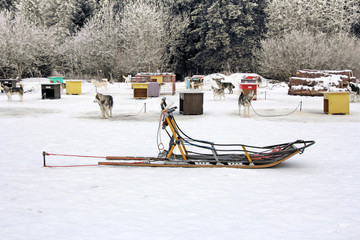 Sled dog team5