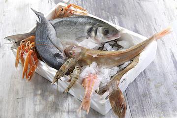 Criée / Marée - Caisse de poissons