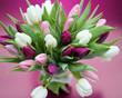Tulpenstrauß weiss und lila