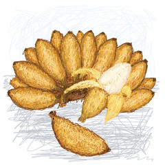 illustration of bunch, peeled and single small bananas with scie