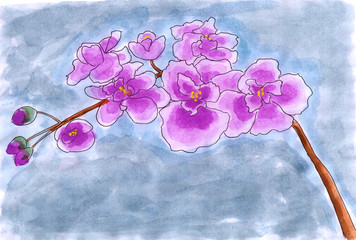 illustration water color flower Moth orchid
