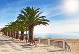 Boulevard on the beach with palm trees near the ocean. poster