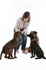 Hundetrainerin mit 3 Hunden