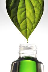 herb medical
