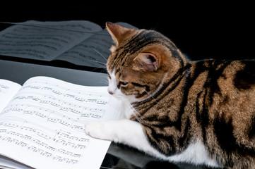 Gatto sullo spartito musicale - Cat on piano