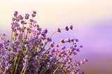 Fototapety Lavender flowers bloom summer time